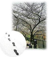 街の雪.jpg