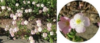 道端の花.jpg